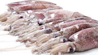 squid and other seafood supplier