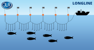 long line fishing